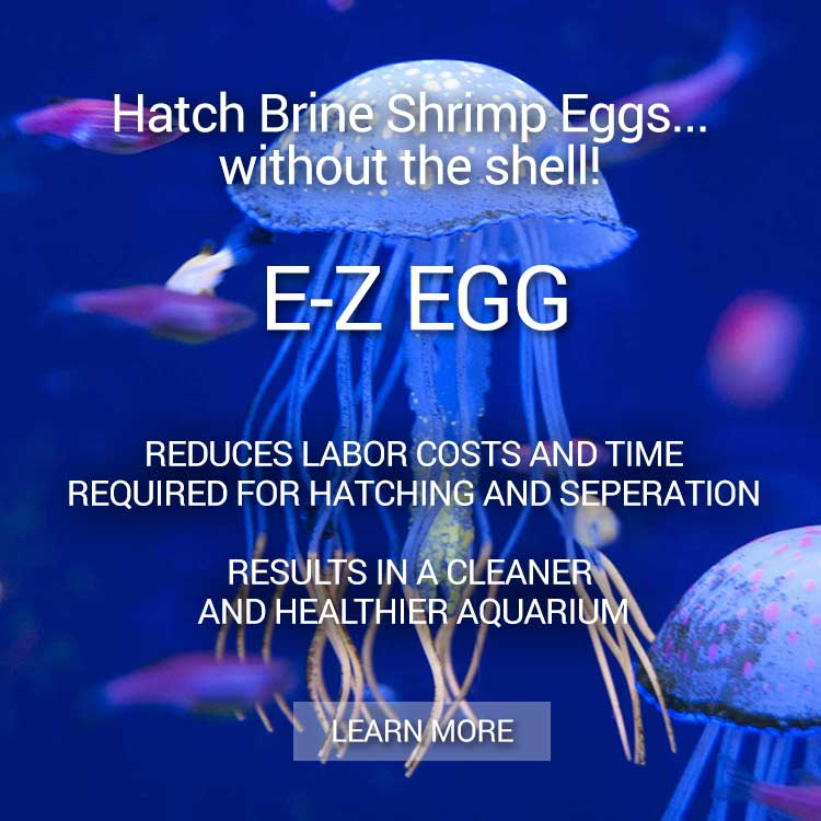 e-z-egg-brine-shrimp-eggs-b.jpg