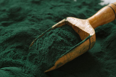 spirulina fish food - Superfood for fish
