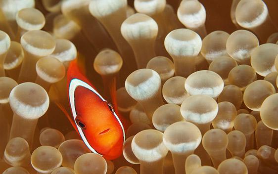 Brine Shrimp Direct | Quality Aquarium Fish Food Products