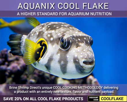 Save 20% on all COOL FLAKE Products